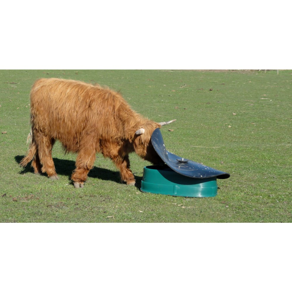 BasisFeeder-cow